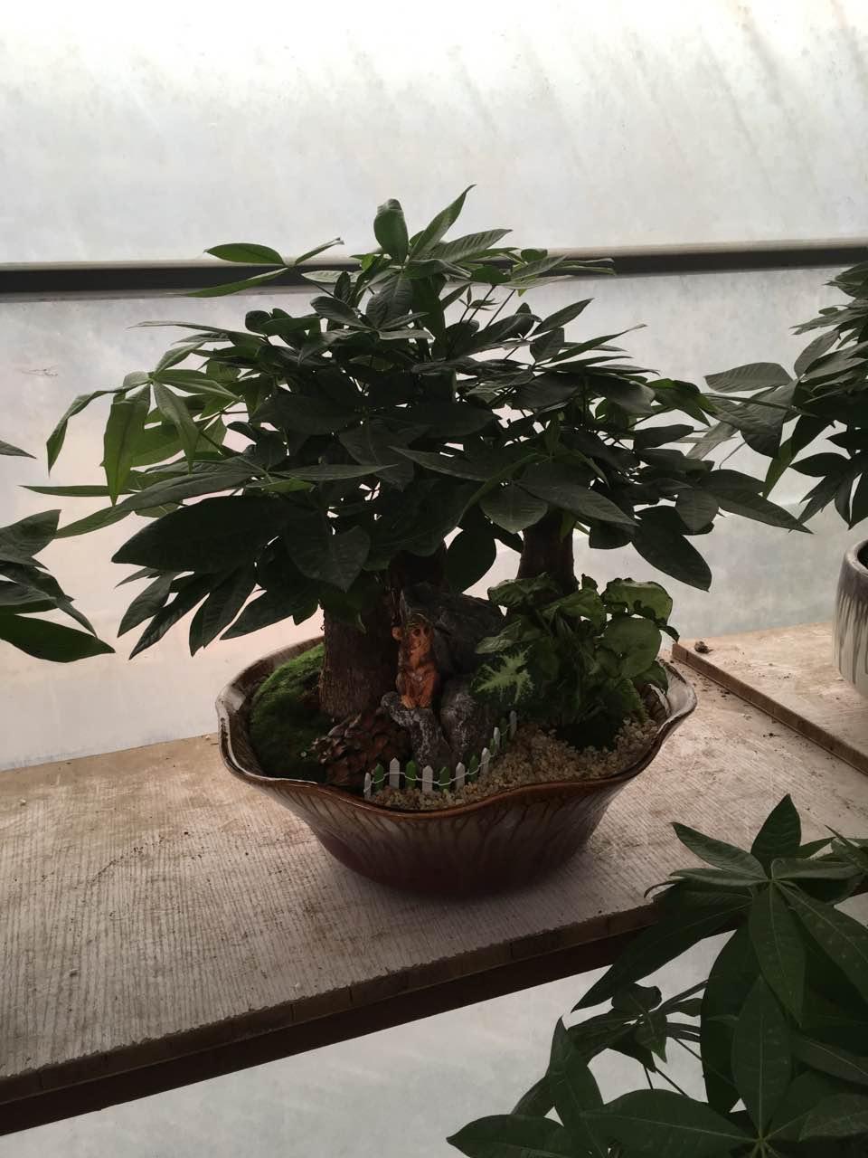 小型绿化植物