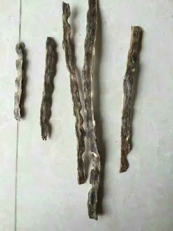 三年树龄分枝条结香|奇楠沉香-茂名电白区春龙奇楠沉香种植专业合作社