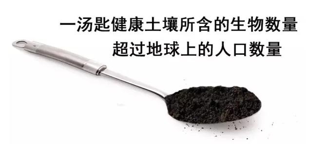 土壤3.png