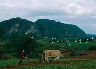 土壤14.png