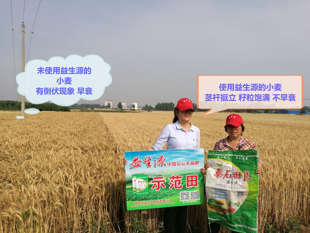 小麦2.png