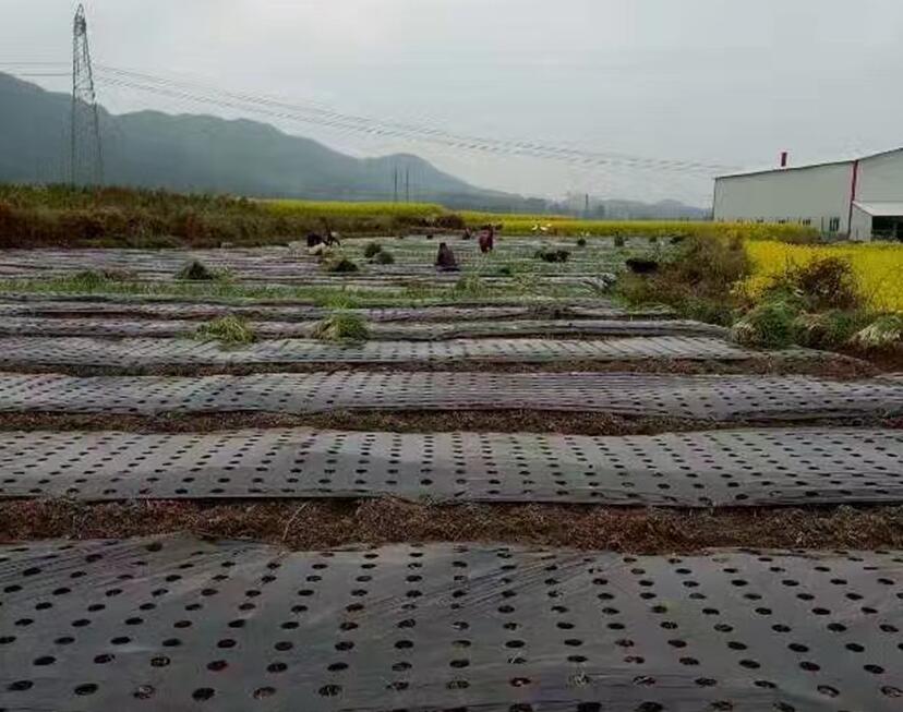 蔬菜种植专用长寿打孔地膜|地膜-贵州晟和兴塑业有限公司