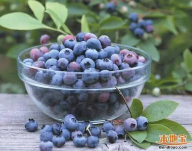 蓝莓苗木销售价格