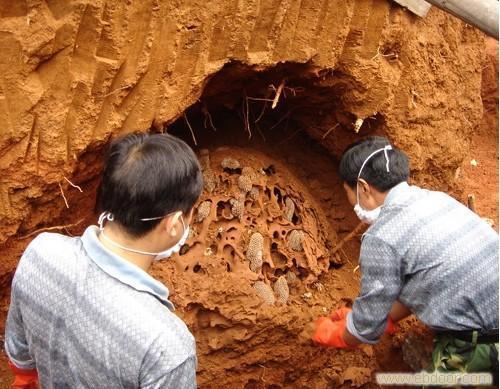 重庆建筑物白蚁防治