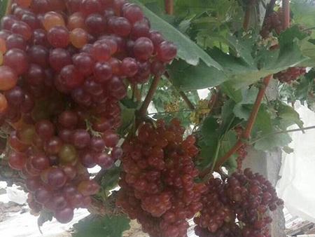 红提葡萄酒