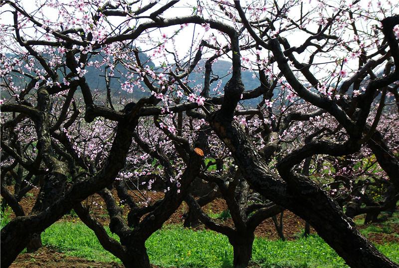 果树7.jpg