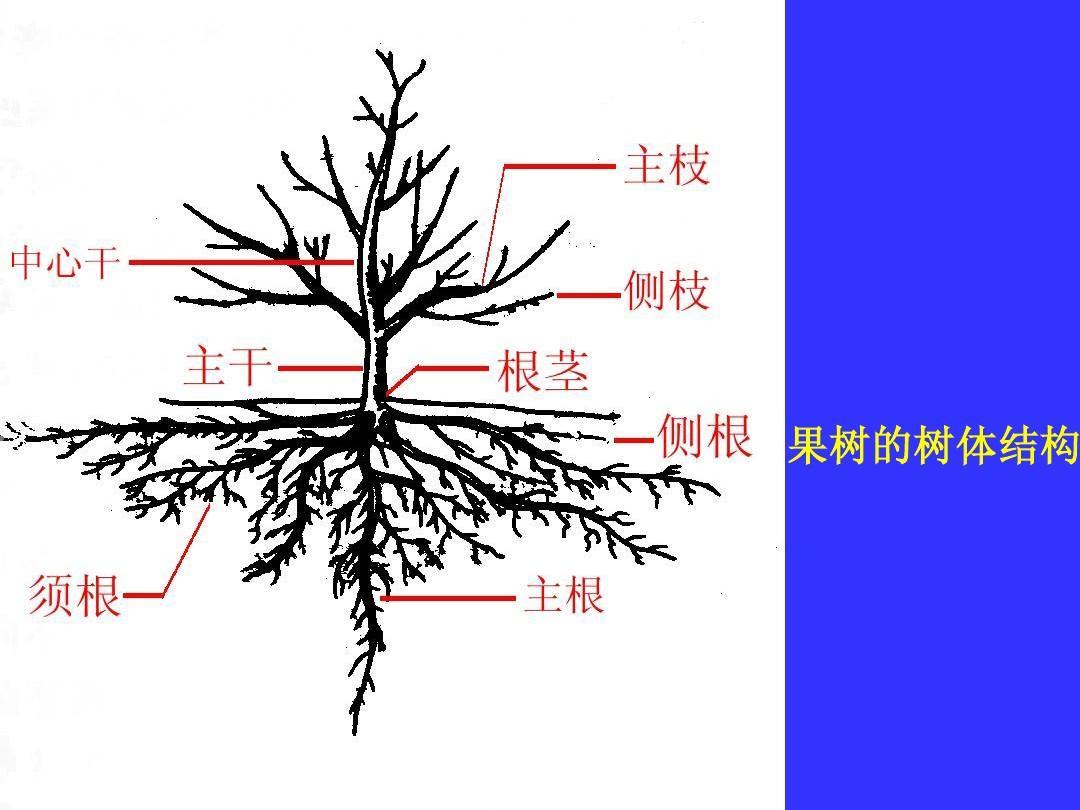 果树11.jpg