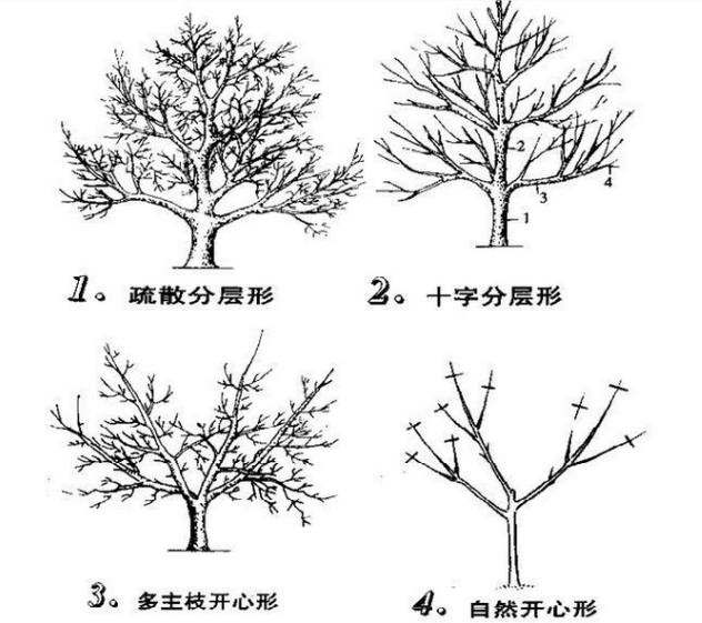 果树10.png
