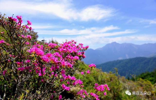 春色满山,南召五朵山为你绽放|景区动态-南阳市五朵山旅游开发有限责任公司