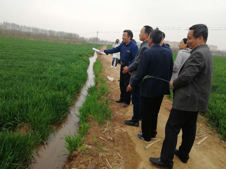 针对如何做好春季麦田管理|工作动态-鹤壁市淇滨区科学技术协会