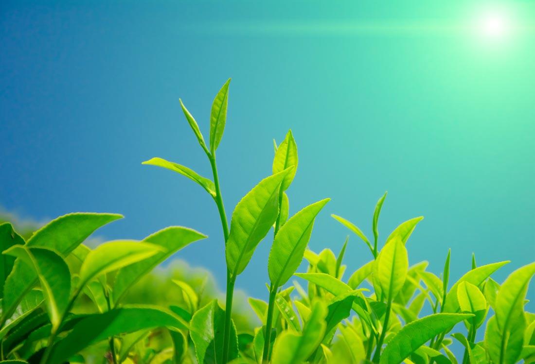 农作物13.jpg