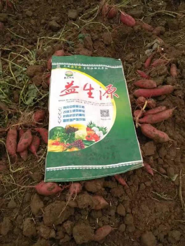 红薯2.jpg
