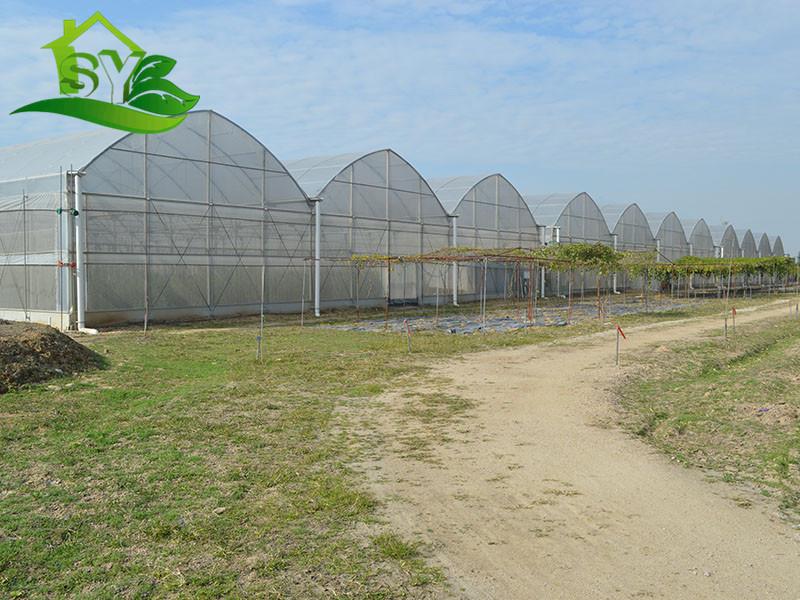 福建温室大棚