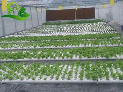 水培 水培-漳州市盛胤机械设备有限公司