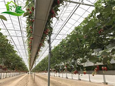 蔬菜水培|案例展示-漳州市盛胤机械设备有限公司