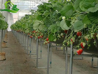 水果水培|案例展示-漳州市盛胤机械设备有限公司