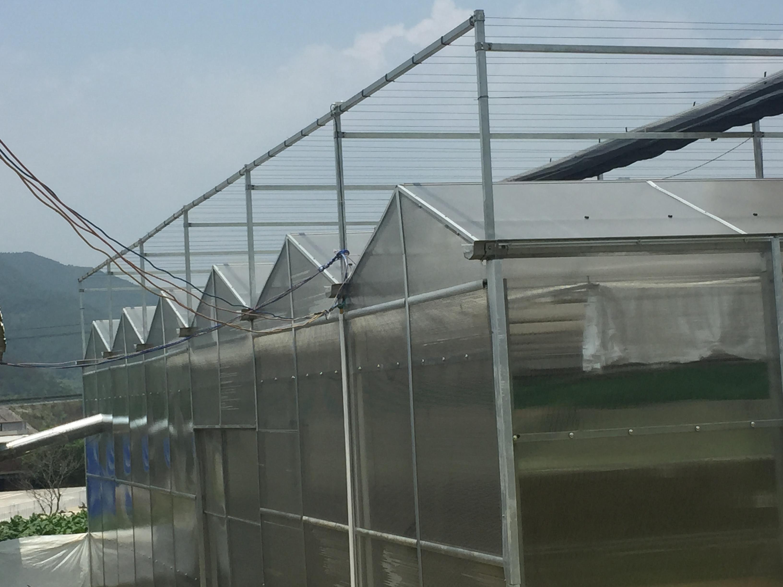 玻璃温室.JPG