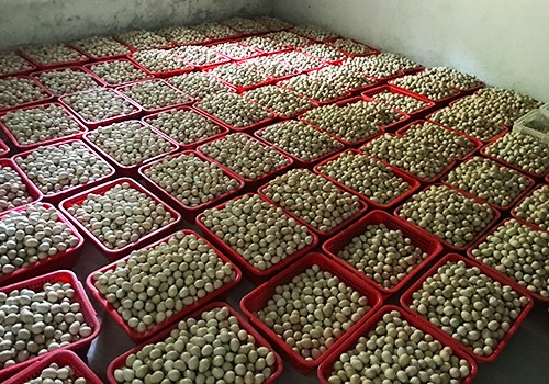 鹧鸪蛋|鹧鸪-肇庆市8888彩票养殖有限公司