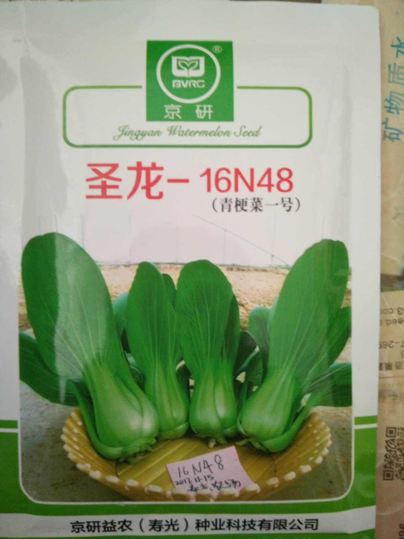 圣龙青梗菜.jpg