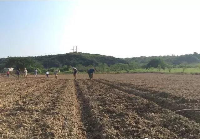 农业18.png