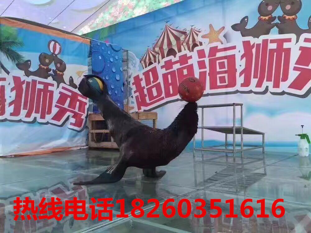 海底世界海洋生物展海狮表演|公司动态-徐州高峰展览服务有限公司