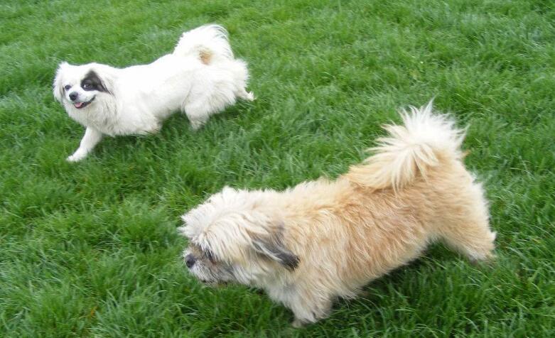 竞技宝官网竞技宝app下载:狗狗的细小症都有什么症状?狗狗得了细小怎么办呢?