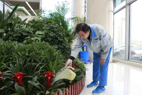 重庆办公绿植租摆服务流程标准/方案/收费