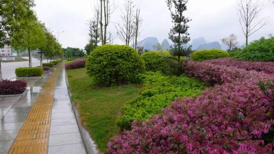 在绿化施工里如何反季节种植