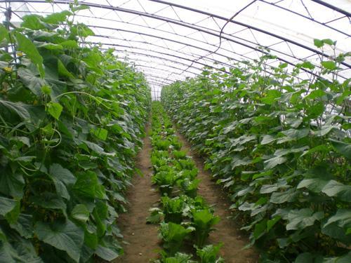 農產品生產基地6.jpg