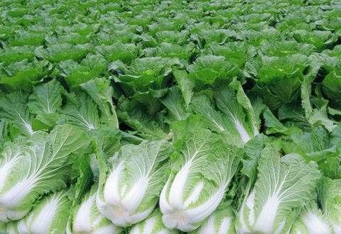 农产品生产基地5.jpg