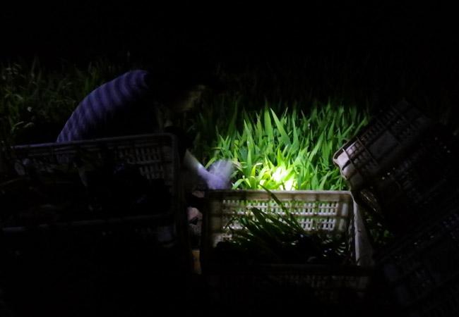 灌云潮河湾景区采购宿根花卉11.5万株|行业资讯-青州市坤盛花卉苗木有限公司