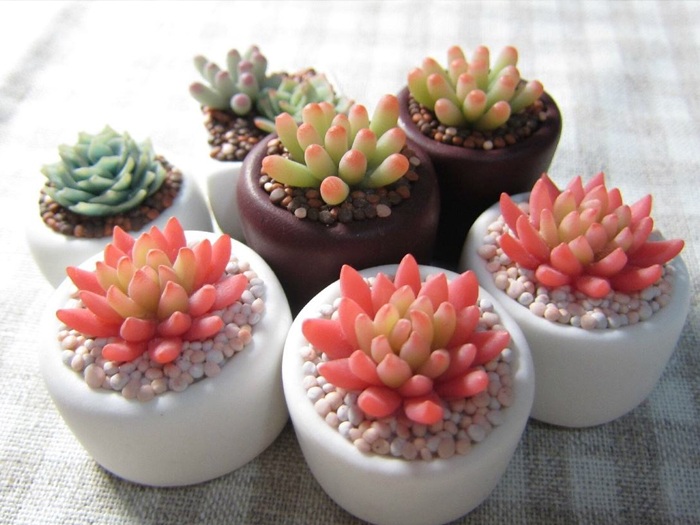 小多肉|花卉-寧夏四季花港園藝有限公司
