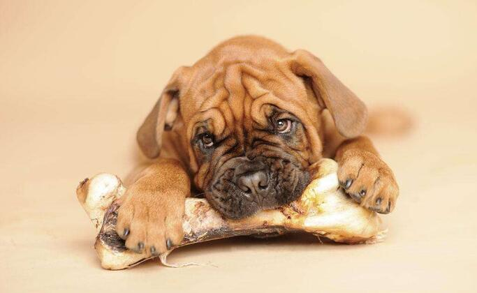 竞技宝官网竞技宝app下载电话:应不应该给狗狗吃骨头?狗狗吃骨头好不好?
