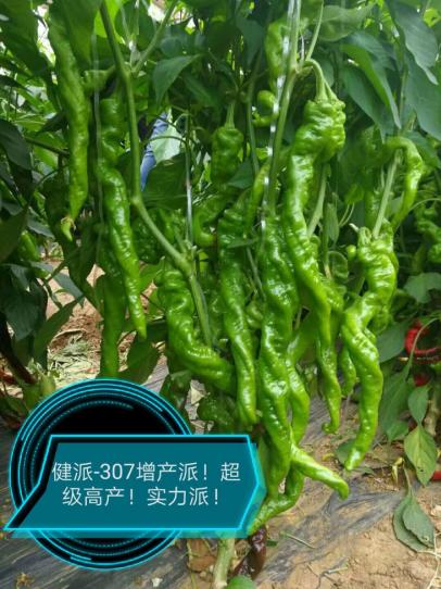 健派--307增产派!|健派叶面肥-南阳市益生源肥业有限公司