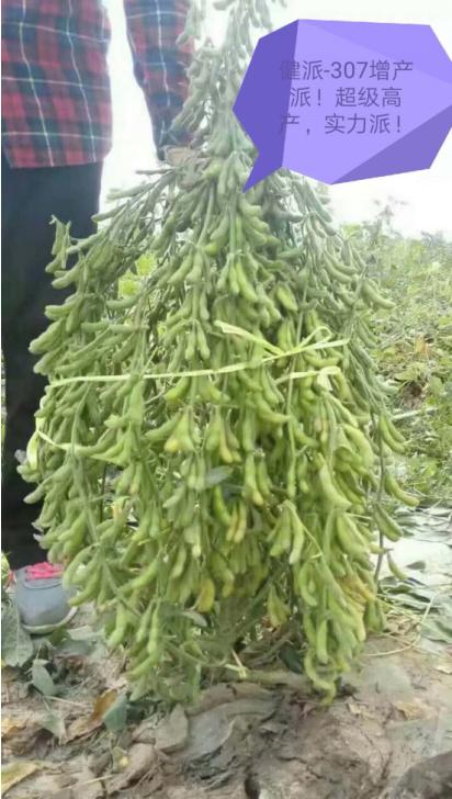 增产豆多帮|健派叶面肥-南阳市益生源肥业有限公司