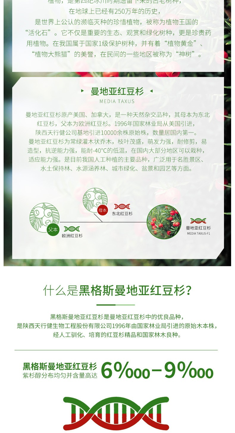 黑格斯红豆杉4年生种苗(10000株起售)|盆景苗木系列-陕西天行健生物工程股份有限公司