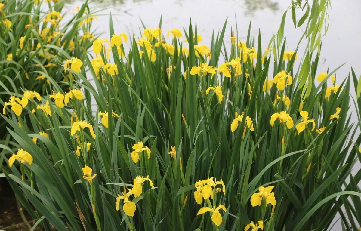 重庆水生植物