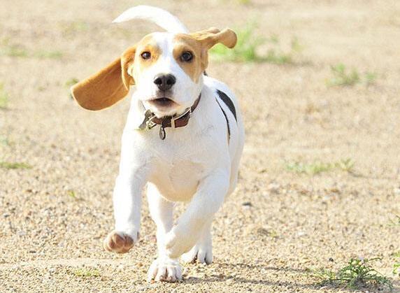 狗狗摇尾巴就是代表喜欢?其实是你想多了!