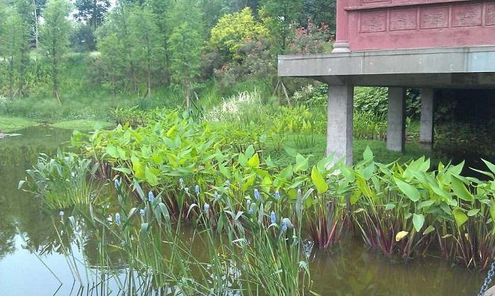 重慶水生植物