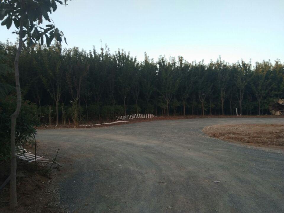 云南土壤固化剂修筑原生态路面陕西生态环境环保道路|西安土壤固化剂-杭州抗疏力新材料环保科技有限公司