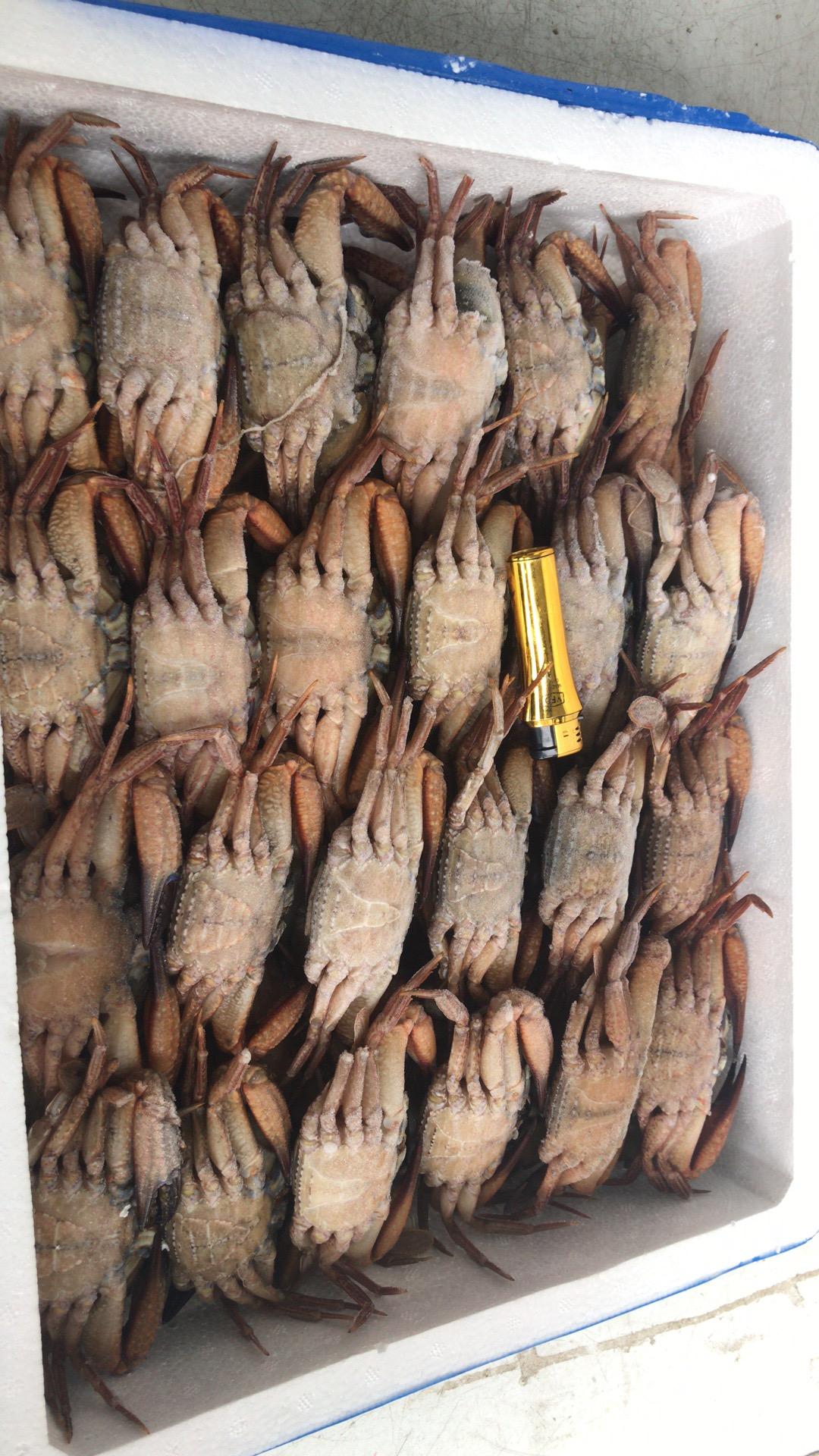 黑蟹80 100.jpg