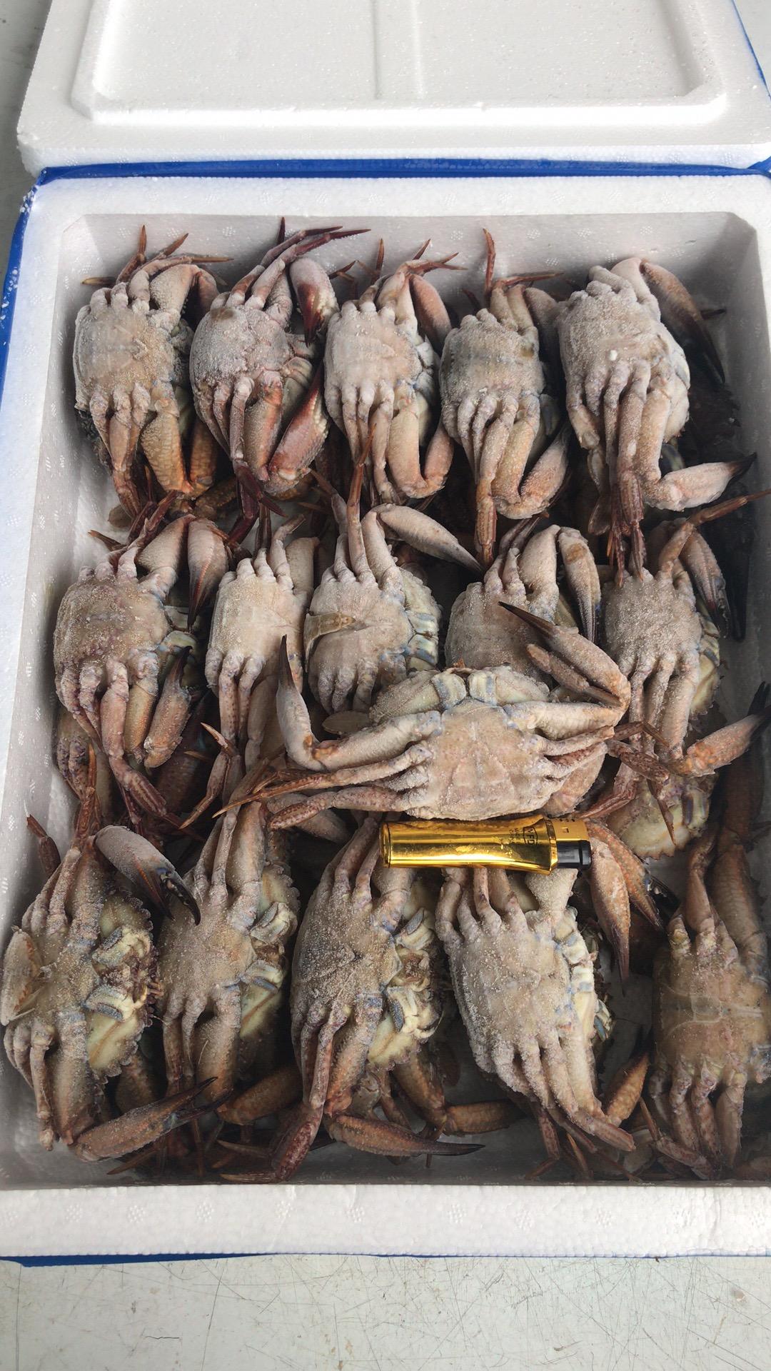 黑蟹100 150.jpg