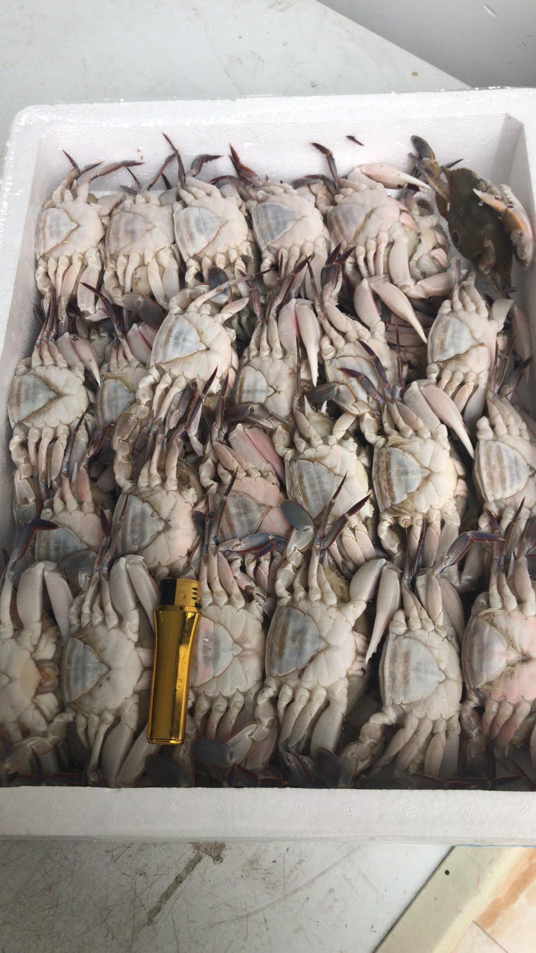 三眼蟹80 100.jpg