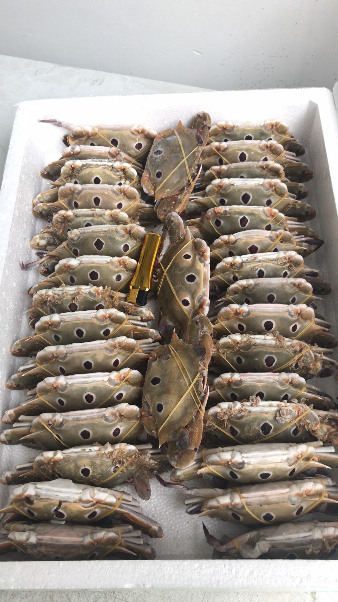 三眼蟹100 150.jpg