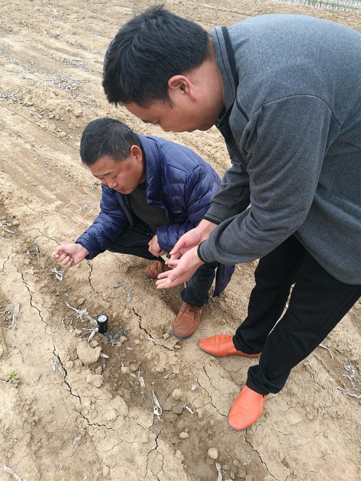 测土活动|田间地头-南阳市益生源肥业有限公司
