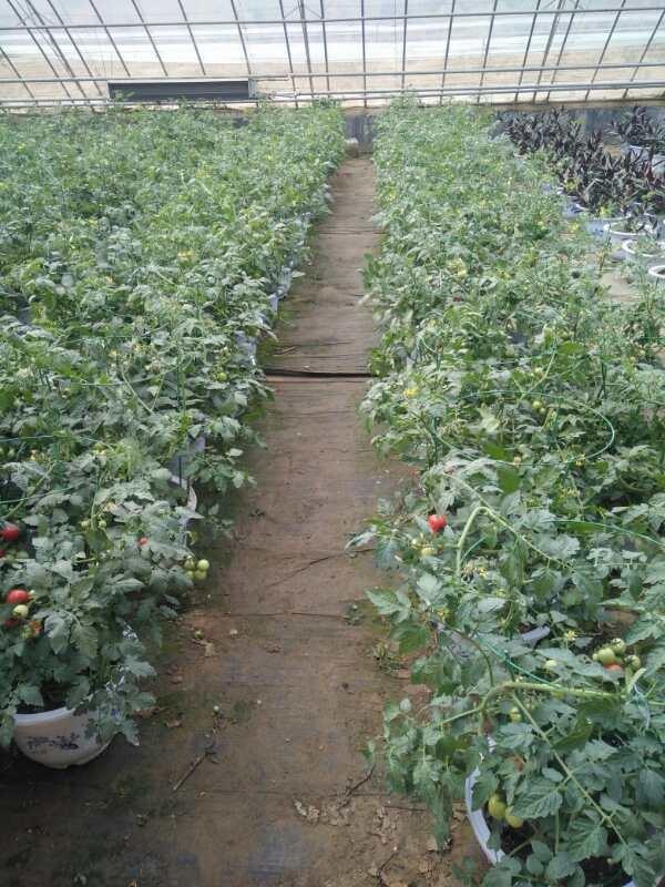 我们公司基地培育的盆栽跟种苗