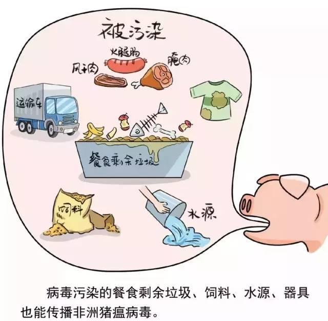 非洲猪瘟病毒污染