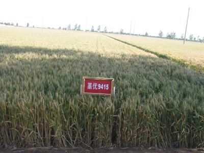 山东小麦深加工