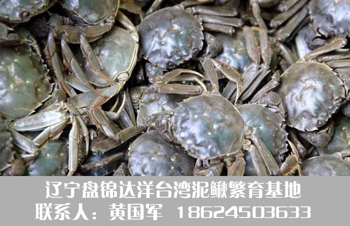 盘锦河蟹养殖.jpg