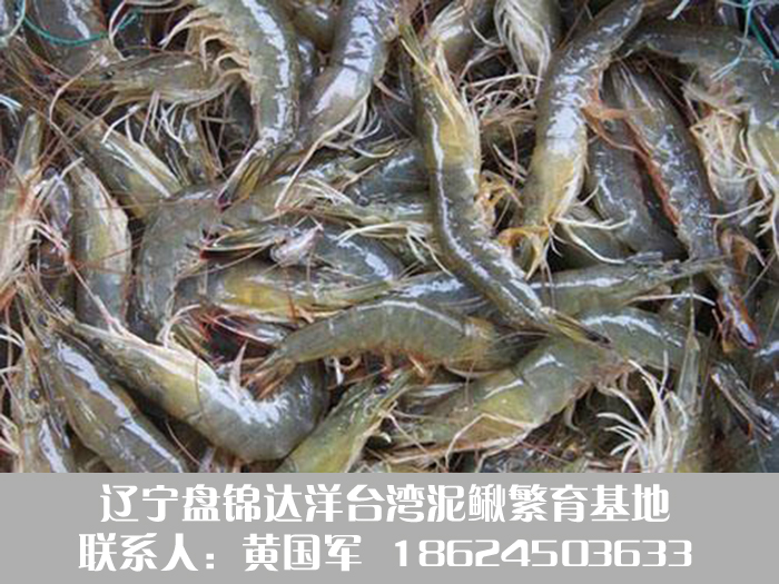 盘锦河虾2.jpg